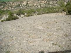 Antic nivell de fons marí conservat a la Posa.